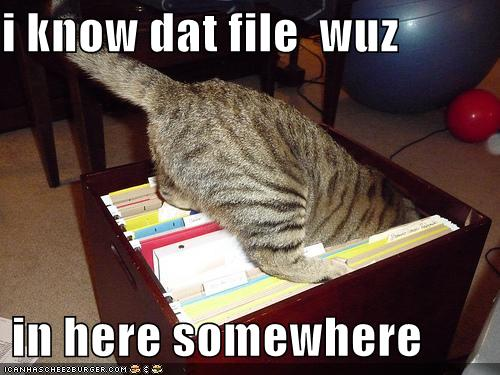 Funny Pictures Cat Searches For File
