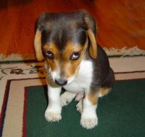 sad_puppy_762581